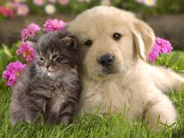 Puppy and Kitten together in the garden.